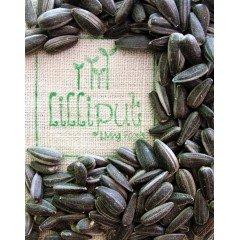 Semillas de Girasol para germinar ecológicas