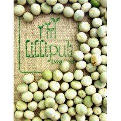 Semillas de Guisante para germinar ecológicas