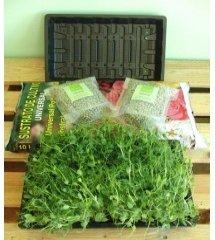 Kit Brotes Verdes