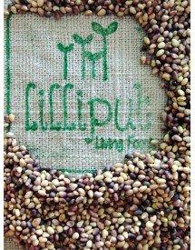 semillas-trebol-rojo-germinar-ecologicas