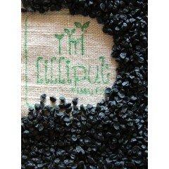 Semillas de Cebolla ecológica para germinar