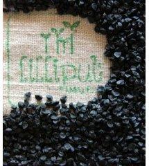 semillas-cebolla-ecologica-germinar