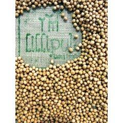 Semillas de Mostaza Blanca para germinar ecológicas