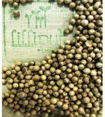 Semillas de Cilantro para germinar ecológicas
