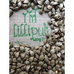 Semillas de Trigo Sarraceno para germinar ecológicas