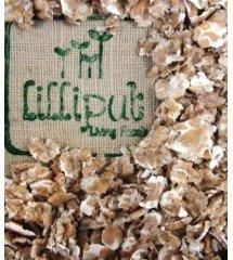 germinados-trigo-copos