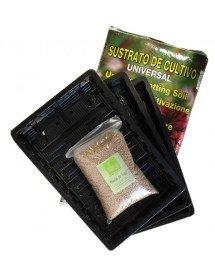 Pack cultivo de Hierba de Trigo
