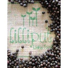 Semillas de Col Lombarda para germinar ecológicas