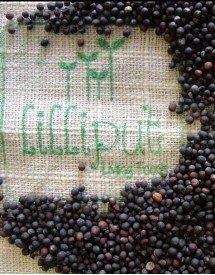 Semillas de Col Kale Negra para germinar