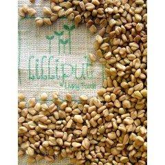 Semillas de Fenogreco para germinar ecológicas
