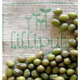 Semillas de Judía Mungo para germinar ecológicas