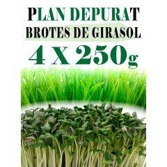 Plan Depurate con Girasol