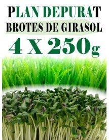 Plan_depurativo_brotes_girasol
