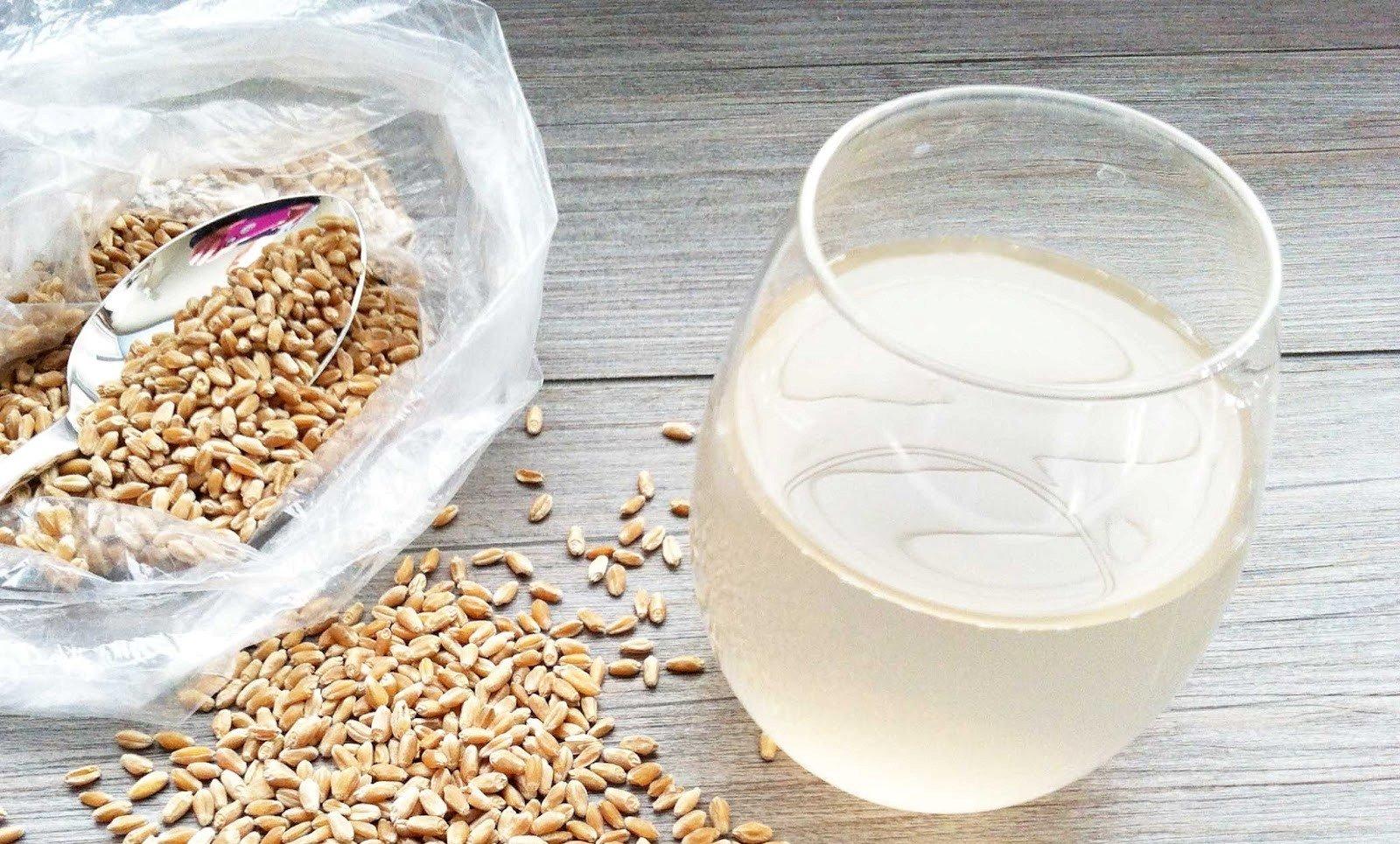 Bebida probiótica de germinados de trigo